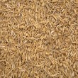 Stock Photo: Rice husk texture