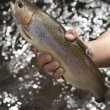 Rainbow Trout grow in flow-through system — Stok fotoğraf