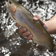 Rainbow Trout grow in flow-through system — Foto Stock