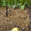 Stock Photo: Cultivator forks and sprinkler
