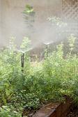 Sprinkle system in the garden — Stock Photo