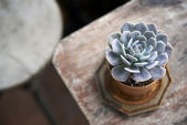 Succulent pot on wooden table — Stock Photo