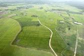 Rice field,bird eye view — Stock Photo