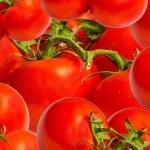 Tomato — Stock Photo #42727105