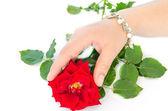 Hand und Rose — Stockfoto