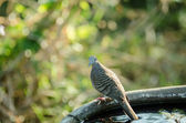 Doves watching — Stock Photo