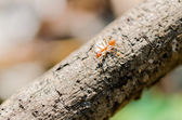 Ants on the branches — Stock Photo