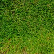 Natural background - green grass texture — Stock Photo