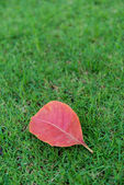 Red leaves on grass — Stock Photo