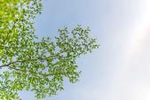 Naturen gröna blad — Stockfoto