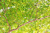 Nature green leaves — Stock Photo