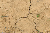 Dried ground covered with cracks — Stock Photo