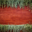 Orange woodden wall with foliage — ストック写真