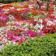 Stock Photo: Pretty manicured flower garden