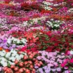Pretty manicured flower garden — Stock Photo