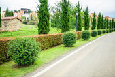 A well landscaped and manicured hedge of bushes — Foto de Stock