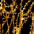 Christmas lights on the branch — Stock Photo