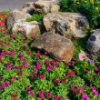 Pretty manicured flower garden — Stock Photo #37117613