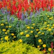Colorful flower garden background — Stock Photo