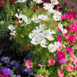 Colorful flower garden background — Stockfoto #37318329