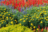 Colorful flower garden background — ストック写真