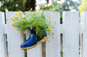Little flower in the shoe decorate — Stock Photo