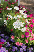 Colorful flower garden background — Stok fotoğraf
