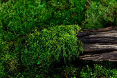 Moss on the old wood — Stockfoto