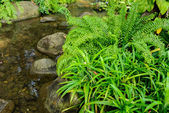 Small stream with ferns — Stock Photo