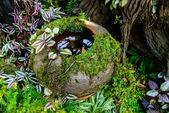 Moss on the jar — Stock Photo
