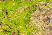 Stones and mosses — 图库照片