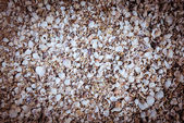 Array of seashells on the beach — Stock Photo