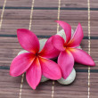 Pink frangipani flower on bamboo mat — Stock Photo #33680699