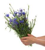 çiçekler beyaz izole kadın el ele tutuşur — Stok fotoğraf