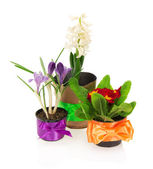 Pots with the different flowers, decorated by a tape, isolated on white — Stock Photo