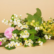 Jasmine branch, linden flowers, tea-rose and the buds of a rose on a beige background — Stock Photo #32291539