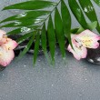 Big leaf of a howea over stones and an alstroemeria flower in water drops, on a gray background — Stock Photo