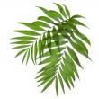 Two leaves of a palm tree isolated on white — Foto Stock