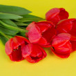 Beautiful spring tulips bunch on a yellow background — Stock Photo