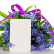 Gentle bouquet of blue squills with a ribbon and a card, isolated on white — Stock Photo