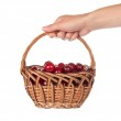 Basket with sweet cherries in the female hand — Stock Photo #32299145