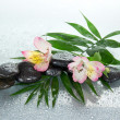 Wet stones and alstroemeria flower on a howea leaf, on a gray background — Stock Photo