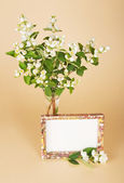 Charming bouquet of a jasmine and motley frame — Stock Photo