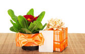 Primula on a bamboo cloth, a gift box and a card, isolated on white — Stock Photo