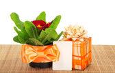 Primula sur un tissu de bambou, une boîte-cadeau et une carte, isolé sur blanc — Photo