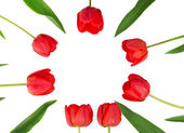 As tulipas vermelhas, que foram belamente em um círculo — Fotografia Stock