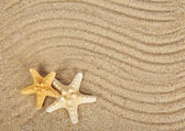 Delightful starfishes on sand — Stock Photo