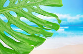 Tropical leaf with water drops against a beach — Stock Photo