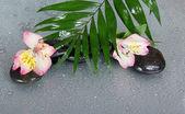 Grandes feuilles d'un howea sur pierres et une fleur alstroemeria en gouttes d'eau, sur un fond gris — Photo
