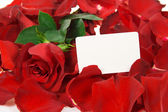 Cardboard and red rose in petals isolated on white — Stock Photo